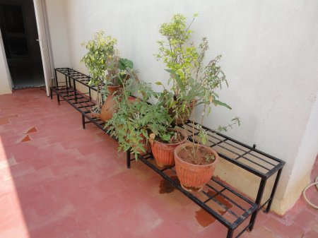 Where Can I Get Plant Stand In Bangalore Indusladies